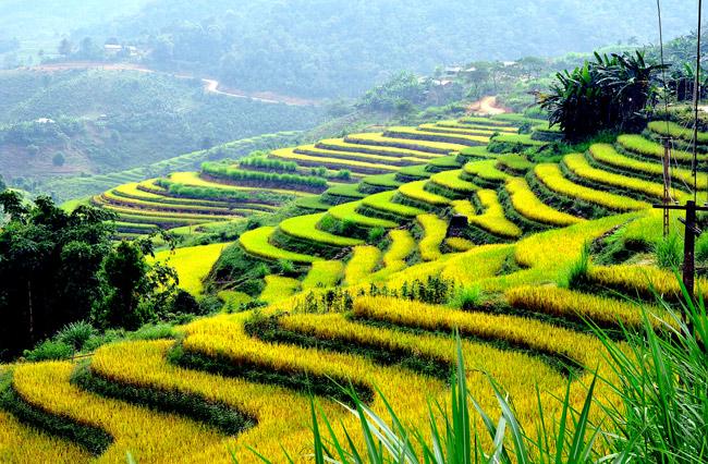 Chiêm ngưỡng vẻ đẹp ngoạn mục của ruộng bậc thang Hồng Thái