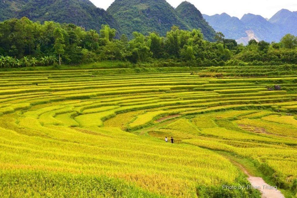 Ruộng bậc thang Pù Luông